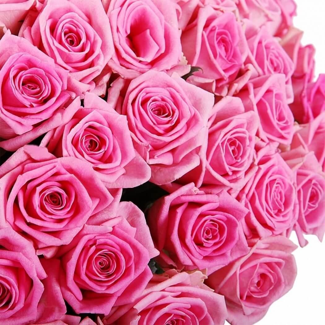 101_pink_roses_bant_3