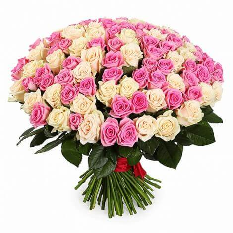 101_white_and_pink_roses_1