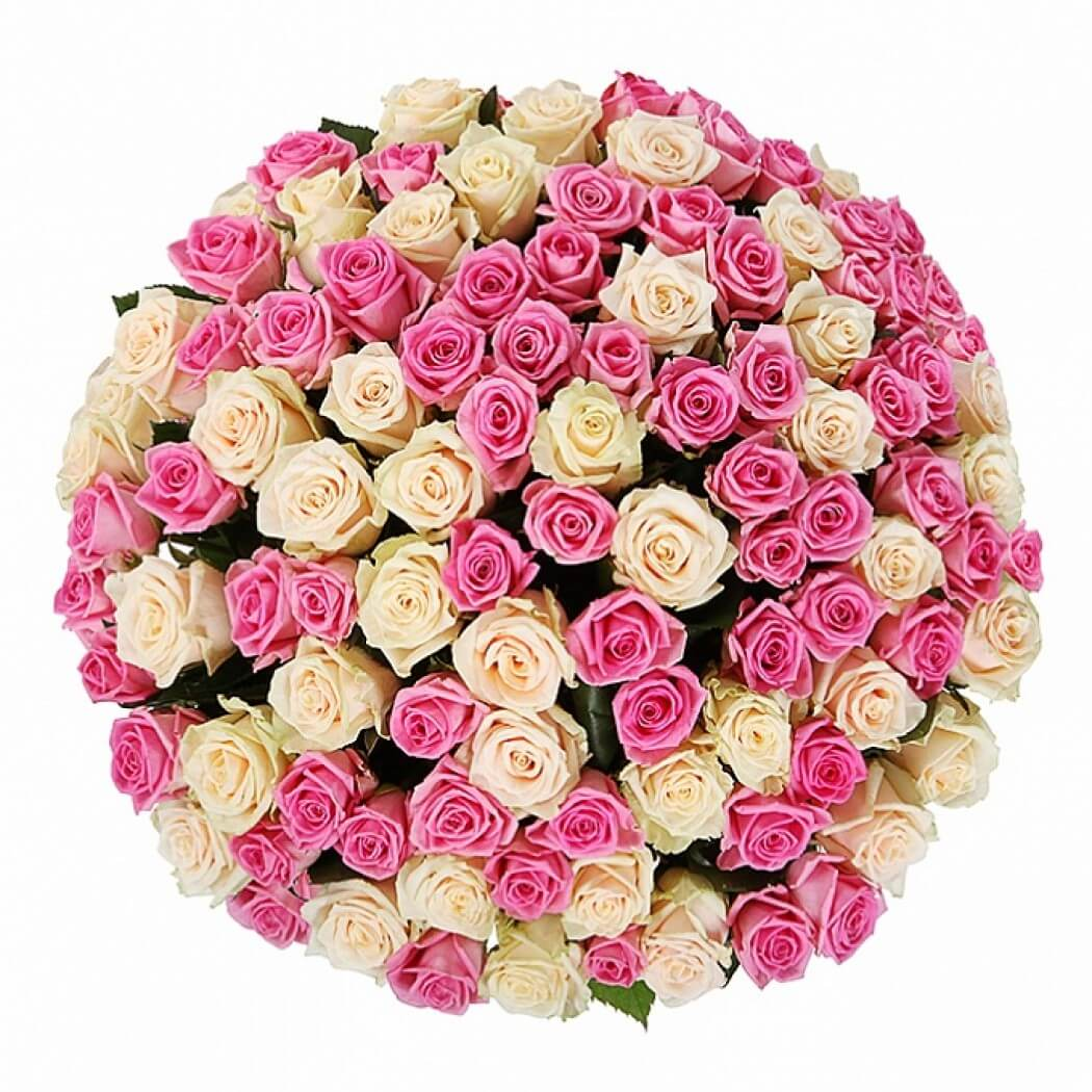 101_white_and_pink_roses_2