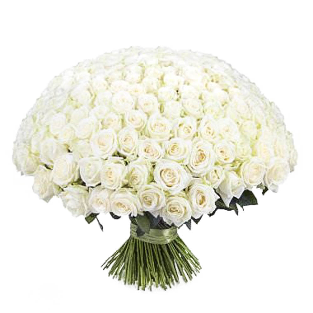 201_white_roses_bant_1