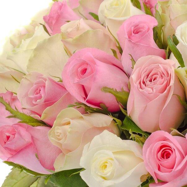51_pink_white_rose_bant_2
