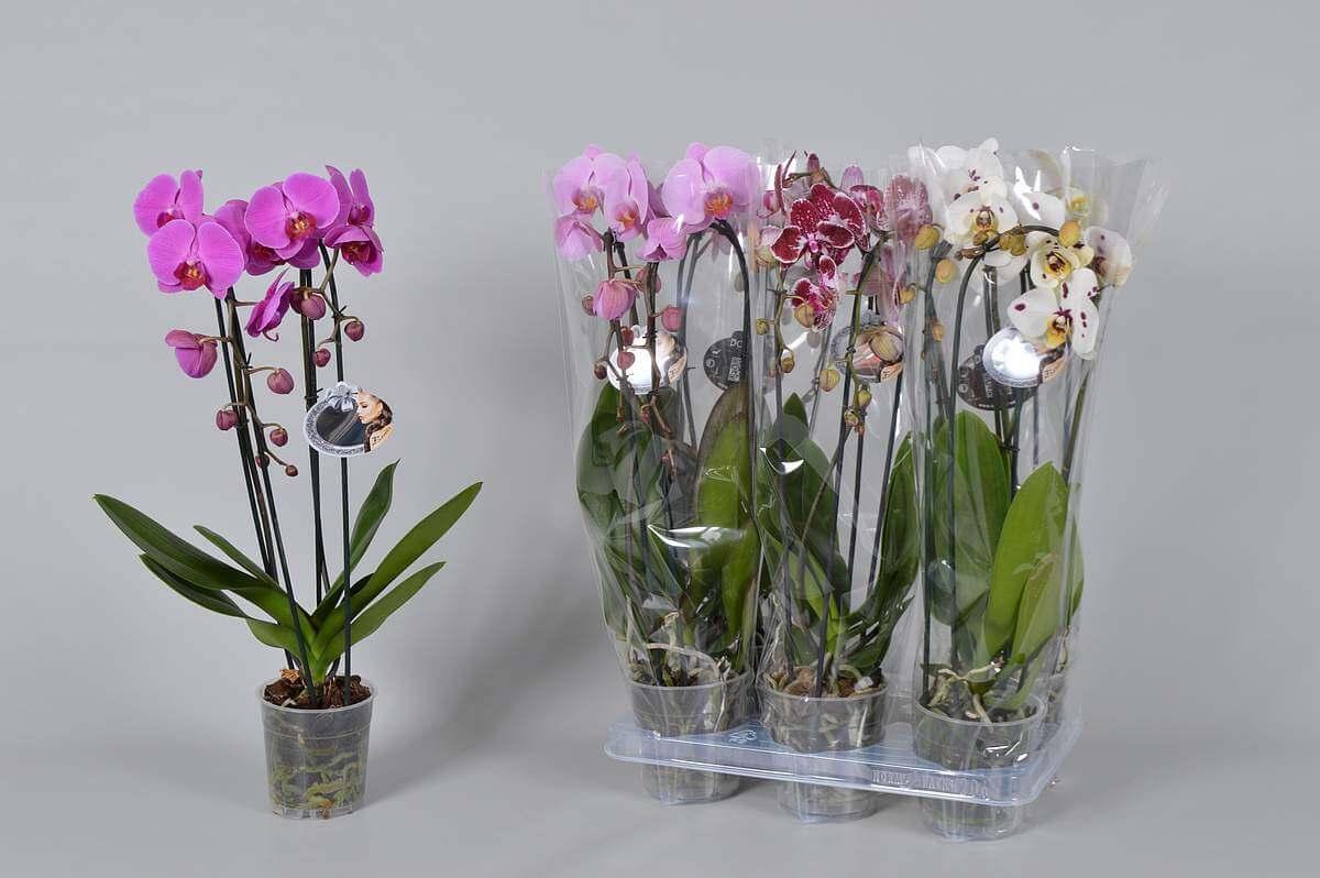 Купить цветы в горшках пенза